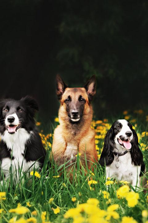 Język polski lubi psy! / C1